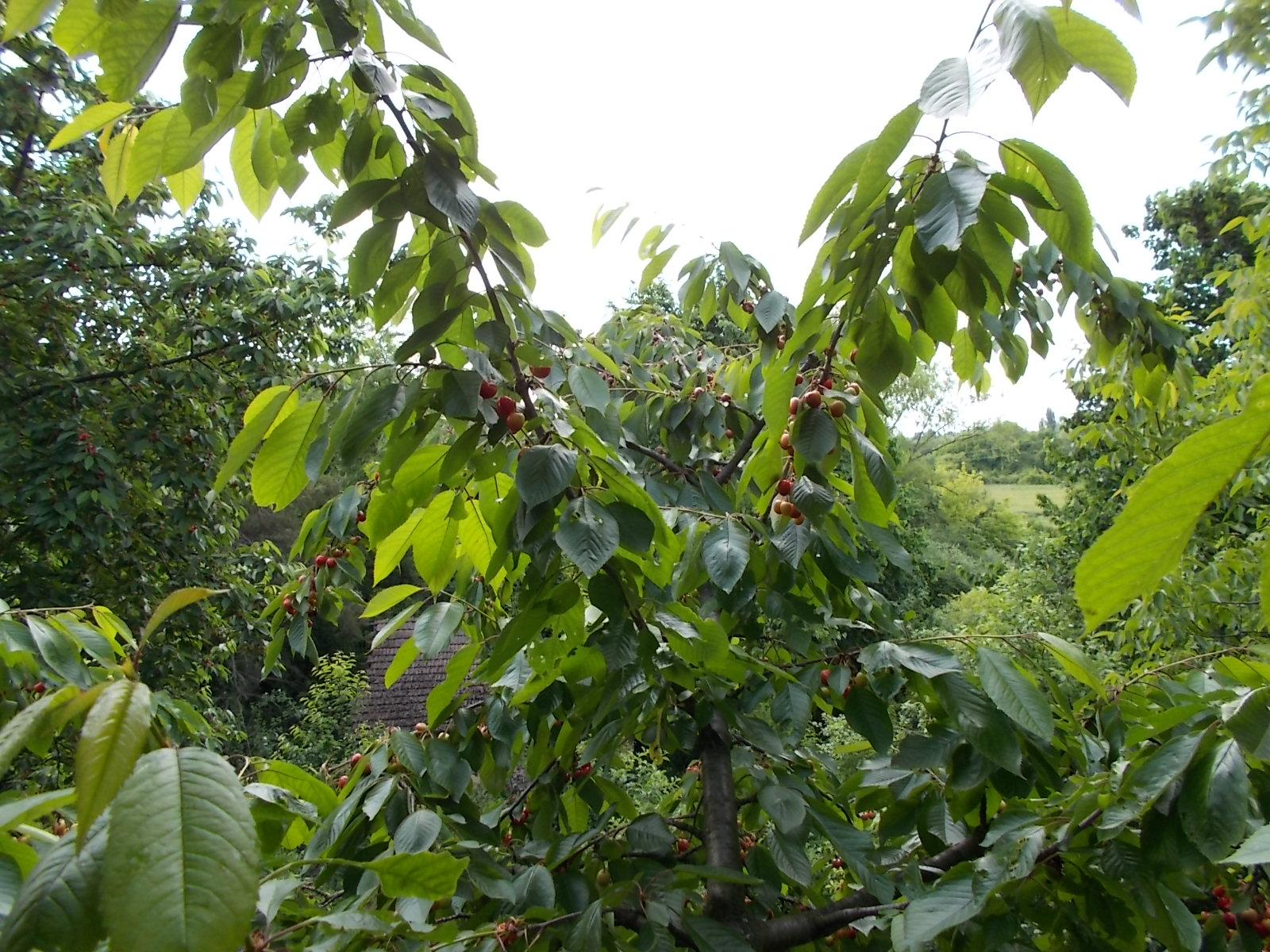Gyümölcsész tér